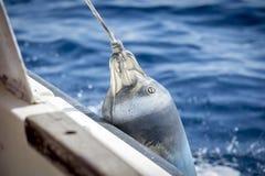 Amortisseur sur le bateau Photo libre de droits