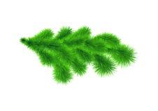 Amostra de ramo de árvore do Natal Imagens de Stock Royalty Free