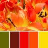 Amostras de folha da cor e tulipas alaranjadas Fotografia de Stock