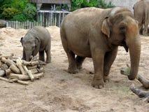 AMother i dziecko słoń przy safari parkiem w UK Obrazy Stock