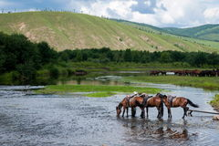Amount Ergunaen horses and the town of River Royalty Free Stock Photo