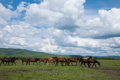 Amount Ergunaen horses and the town of River Royalty Free Stock Photos