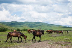Amount Ergunaen horses and the town of River Stock Photography