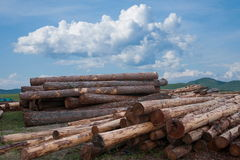 Amount Ergunaen timber storage yard and the town Stock Image
