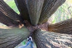 Amour à la nature Photographie stock libre de droits