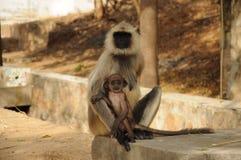 Amour animal Image libre de droits