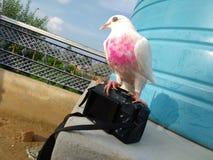 amour avec des oiseaux Photos stock