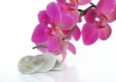 Amour avec l'orchidée Image libre de droits