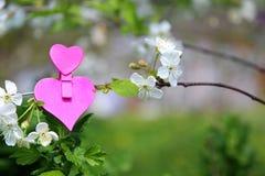 Amour Coeur en bois dans les fleurs de cerisier Pince à linge en bois sous forme de coeur Photo stock