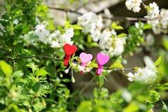 Amour Coeur en bois dans les fleurs de cerisier Pince à linge en bois sous forme de coeur Photo libre de droits