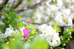 Amour Coeur en bois dans les fleurs de cerisier Pince à linge en bois sous forme de coeur Images stock