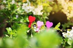 Amour Coeur en bois dans les fleurs de cerisier Pince à linge en bois sous forme de coeur Photos libres de droits