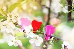 Amour Coeur en bois dans les fleurs de cerisier Pince à linge en bois sous forme de coeur Photographie stock