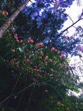 Amour comme arbre Images stock
