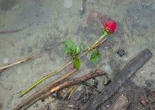 Amour détruit Photographie stock libre de droits