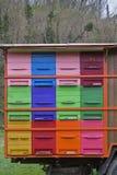 Amour d'abeilles coloré Images libres de droits