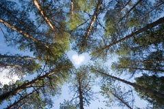 Amour d'arbre Image libre de droits
