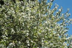 Amour 3 d'arbre Image libre de droits