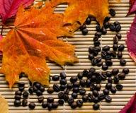 Amour d'automne pour le café Photographie stock