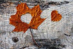 Amour d'automne - une feuille d'automne avec le coeur Photos libres de droits