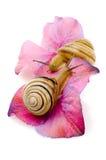 Amour d'escargot Photo libre de droits