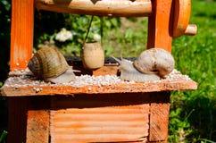 Amour d'escargot Photos stock