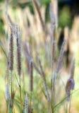 Amour d'herbe Photos libres de droits