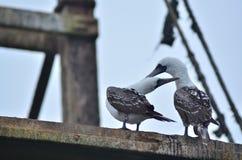 Amour d'oiseau Photos libres de droits