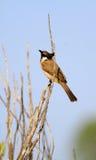 Amour d'oiseau Photographie stock libre de droits