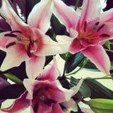 Amour d'orchidée Image libre de droits