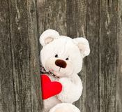 Amour d'ours Photo stock