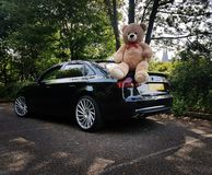 Amour d'ours d'Audi A4B8 à l'amie Images stock
