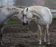 Amour dans la brume Image libre de droits