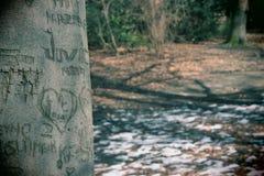 Amour dans la forêt Photographie stock