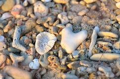 Amour dans les roches et le corail Photographie stock