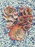 Amour dans les succulents Photographie stock libre de droits