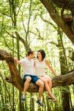 Amour - date sur l'arbre Image stock
