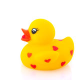 amour de canard Images libres de droits