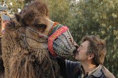 Amour de chameau Images stock