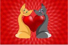 Amour de chat Photographie stock libre de droits