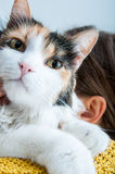 Amour de chat Photographie stock