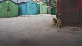 Amour de chat de rue Image libre de droits