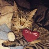 Amour de chat vous Image stock