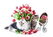 Amour de chats Photographie stock