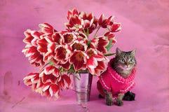 Amour de chats Images stock