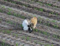 Amour de chats Photo stock