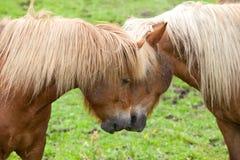 Amour de cheval Photos stock