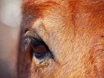Amour de cheval Images stock