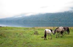 Amour de chevaux Photographie stock