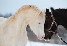 Amour de chevaux Images libres de droits